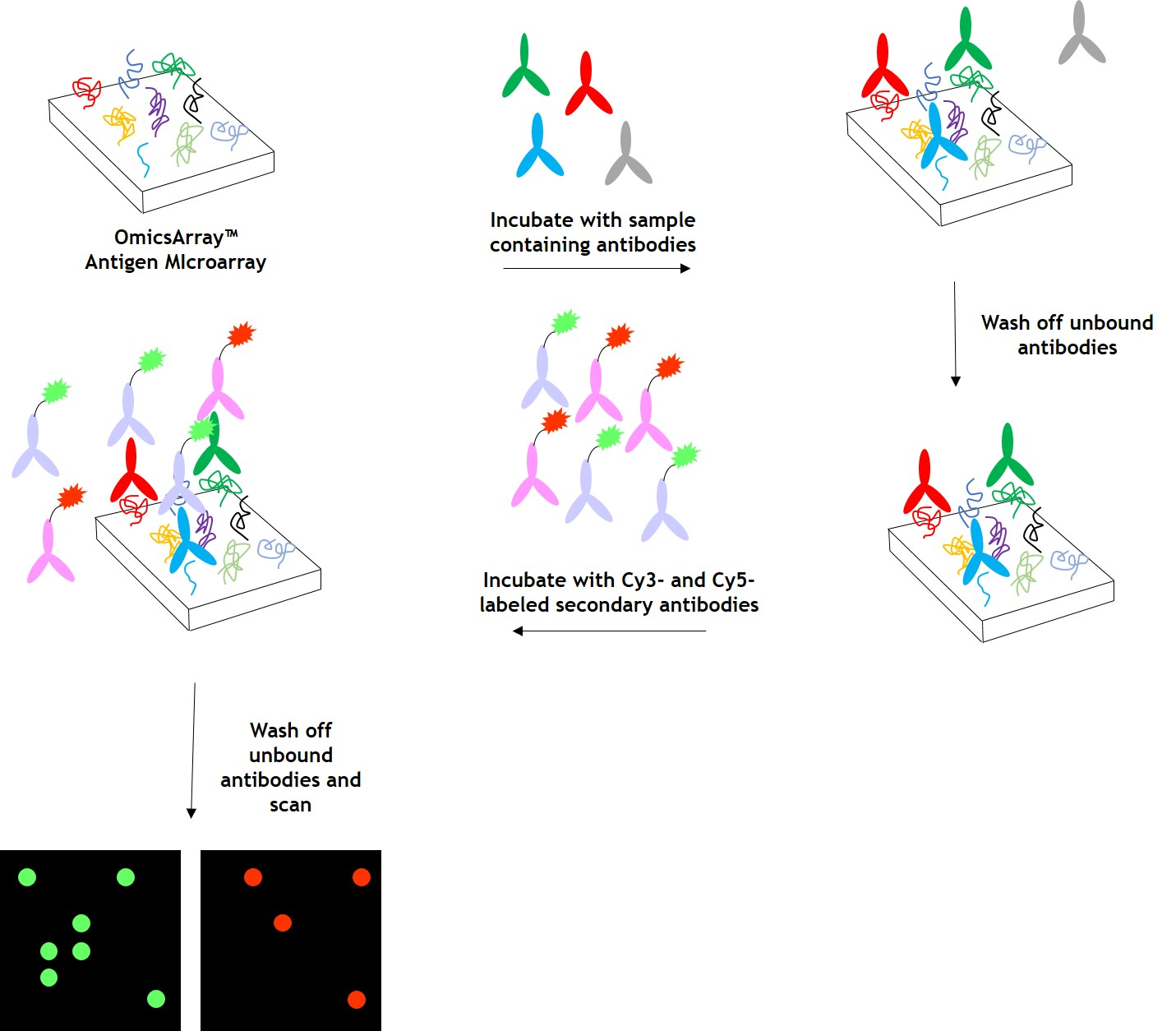 Antigen Microarray Products & Services