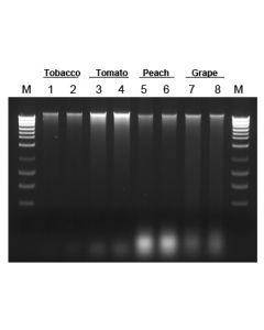 Plant/Fungi DNA Isolation Kit