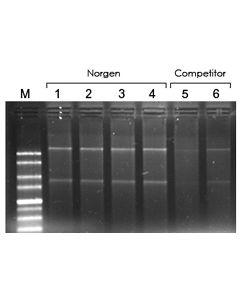 Leukocyte RNA Purification Kit