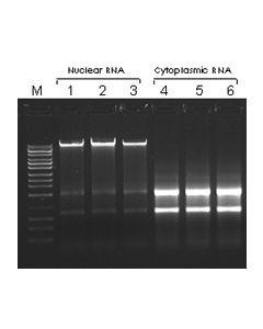 Cytoplasmic & Nuclear RNA Purification Kit