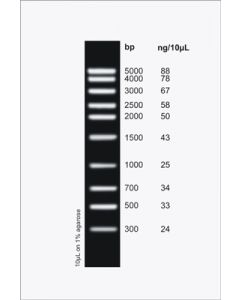 MidRanger 1kb DNA Ladder