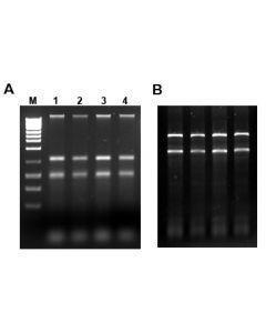 Water RNA/DNA Purification Kit - 0.45 µm