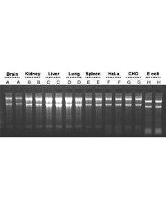 Total RNA Purification Kit (96-Well Format)