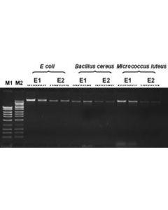 Bacterial Genomic DNA Isolation Kit
