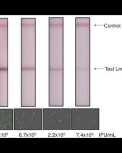 Lentivirus Titration XpressCard (50 tests)