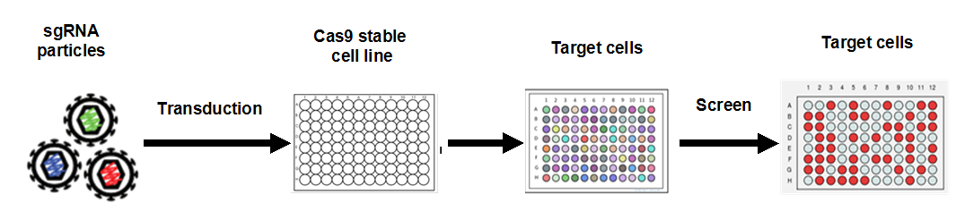 GeneCopoeia-sgRNA-libraries-general